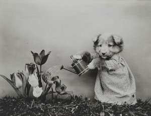 LOLcats watering flowers