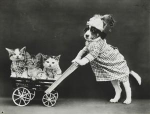 LolCats wheelbarrow