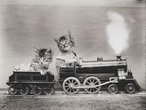 LolCats Train